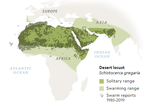 Map showing desert locust across Africa and Asia